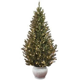 Green Living Tips Rethinking Christmas Potted Trees