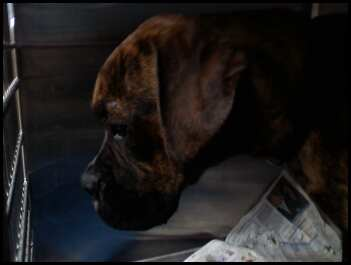 dog in need   timing is critical  a friend of mine  jenny nelson  is a vet