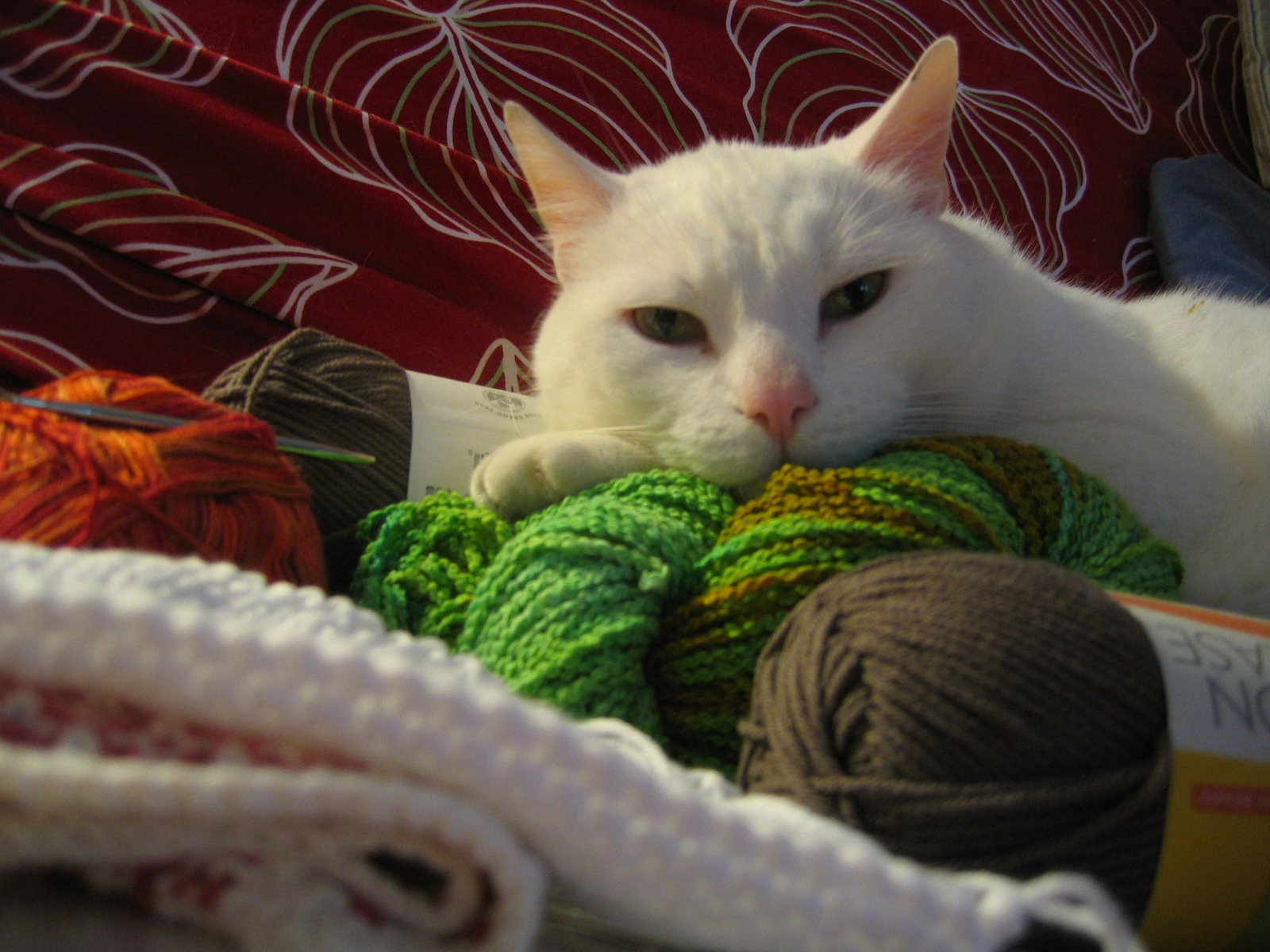[Max+loves+the+yarn+for+this+project]