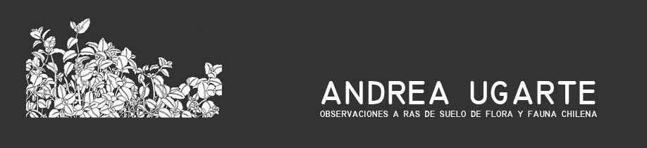 ANDREA UGARTE