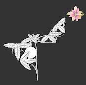 Pasiflora pinatistipula