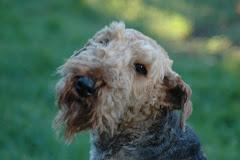 Ellie 22.12. 1997 - 16.10.2010
