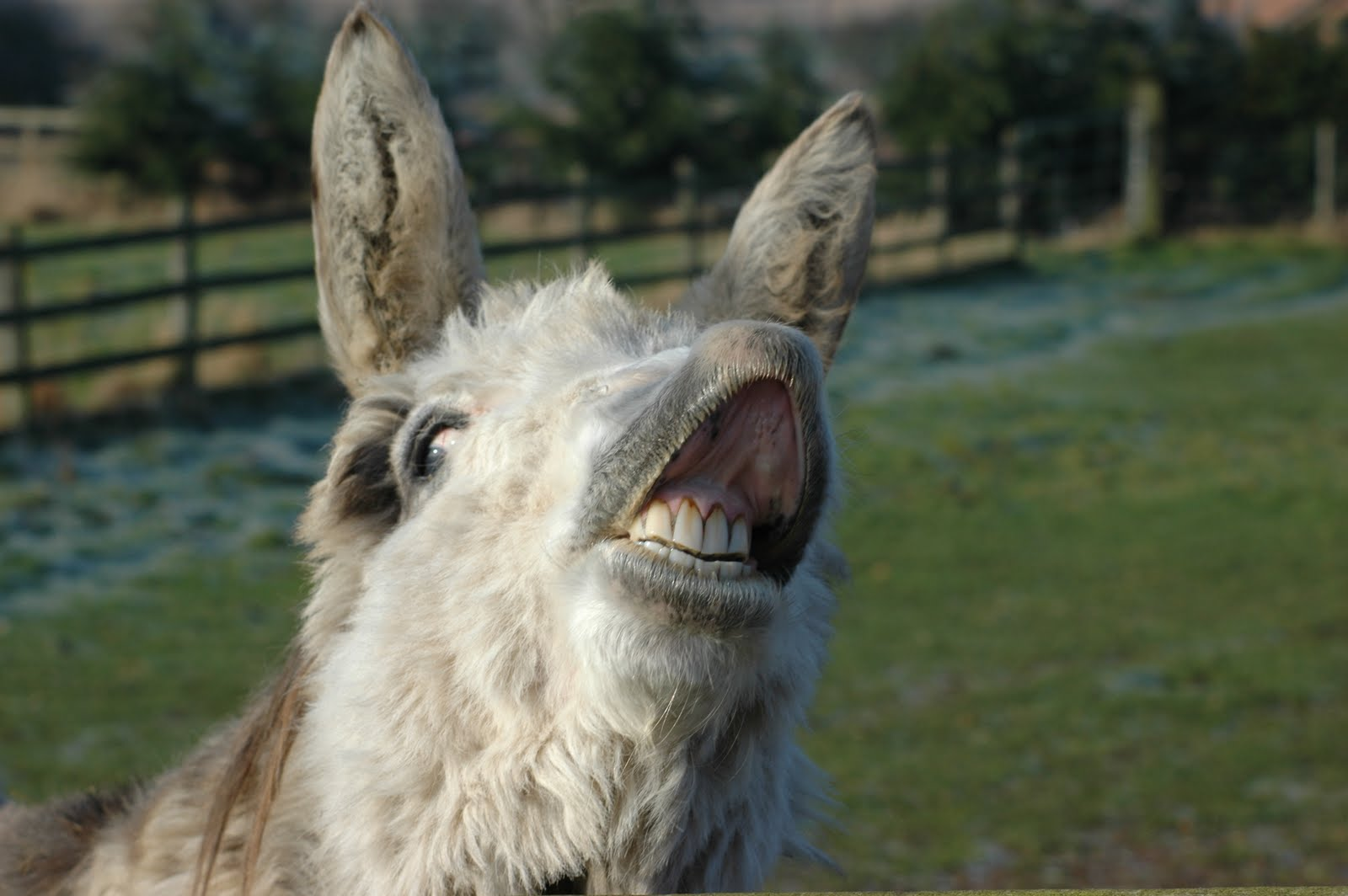 funny donkey faces - photo #30
