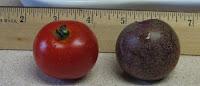 tomato vs. plum