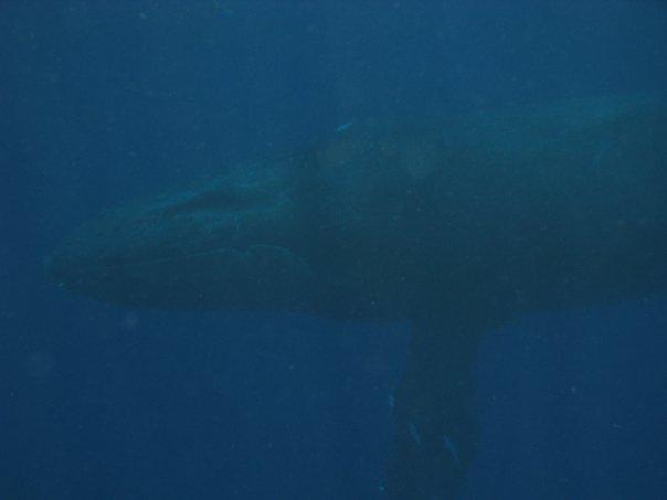 [whaleUW012910-2]
