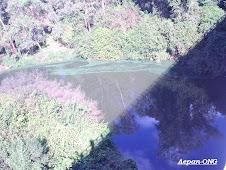Eutrofização no Arroio Boa Vista - 2009