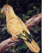 Ararajuba (ano 1996)