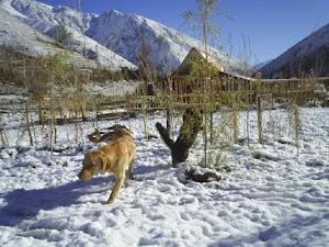La Nieve nos entrega un increible espectaculo ........