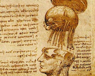 Leonardo-cranio esploso