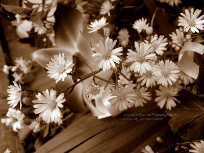 Flower Bouquet, All Saints' Day, Macro Photography, Jaypee David