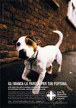 ANIMALI ABBANDONATI E BESTIE IN VACANZA!!!!!