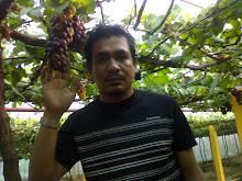 suami d kebun anggur...seronok tengokanggur bergantung2