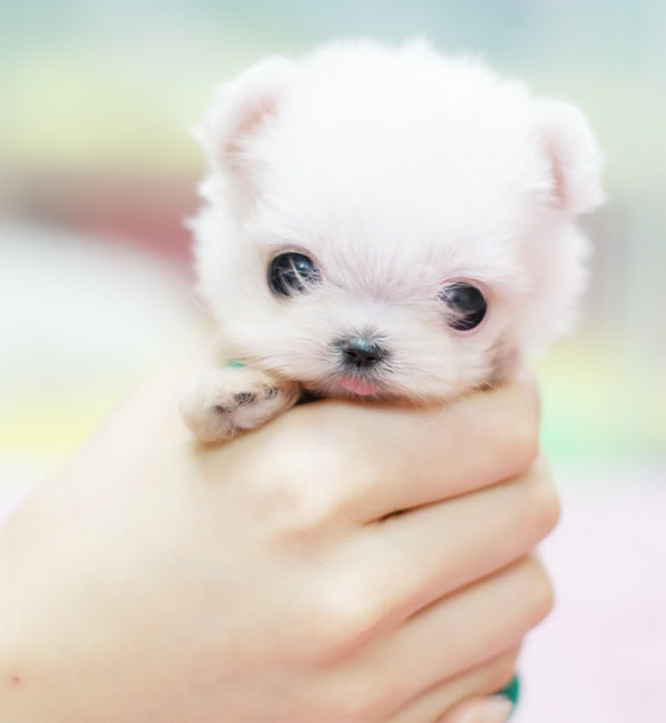 So Cute Puppies wallpaper background