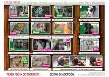 Asociacion Animales de Hellín