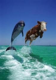 ,,Vaca e subtanta!'' (A. Einstein)