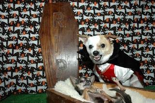 Série: Meu dono é um IMBECIL cachorro do drácula