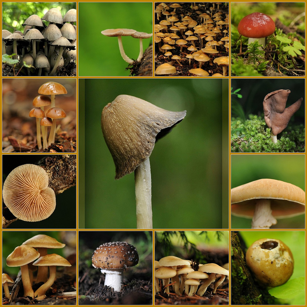 Mushrooms Types