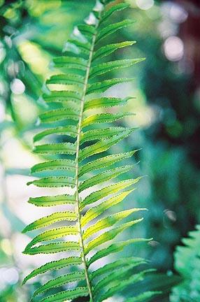 [leaves.jpg]
