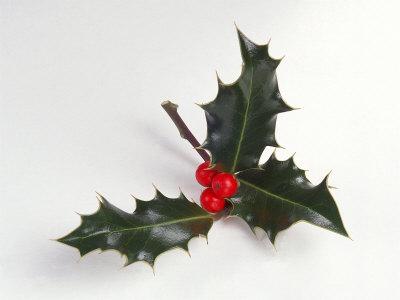 Holly Leaf | New Calendar Template Site