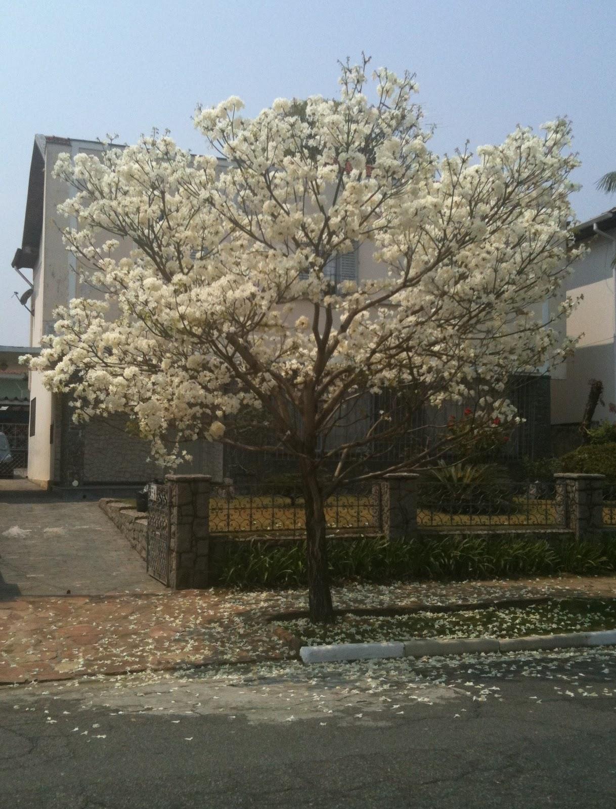 ipe de jardim arvore : ipe de jardim arvore:Verde Jardim: Dia da árvore