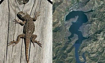 Lizard Discovered in Google Earth - Lizard Spotted on Google Eath