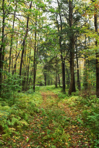 Ohio State Forests achieve 'Sustainability Recognition