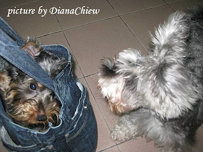 Tote-Bag Silky-Terrier Miniature-Schnauzer