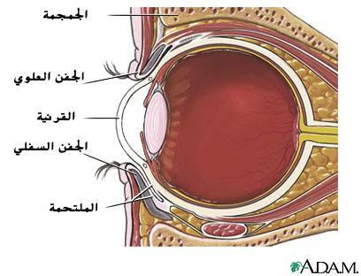 كرة العين