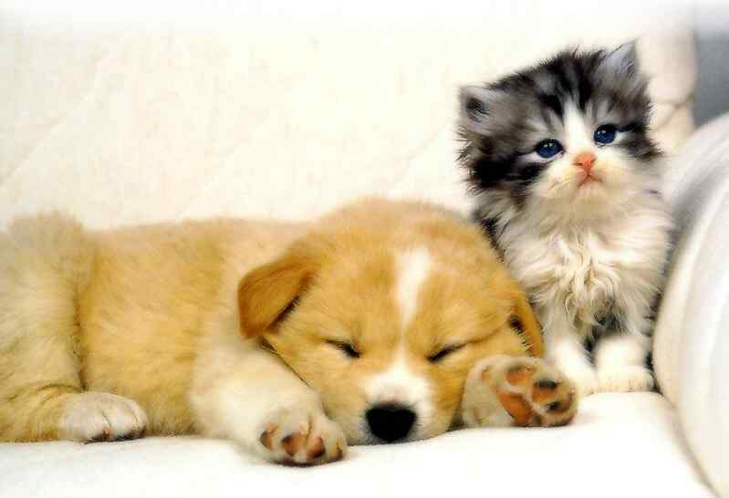 Very cute love between dogs and cats