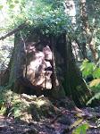 Forest Gaurdian
