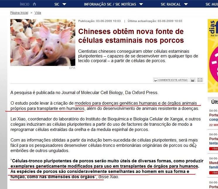 Porcos , transplante de orgãos em humanos