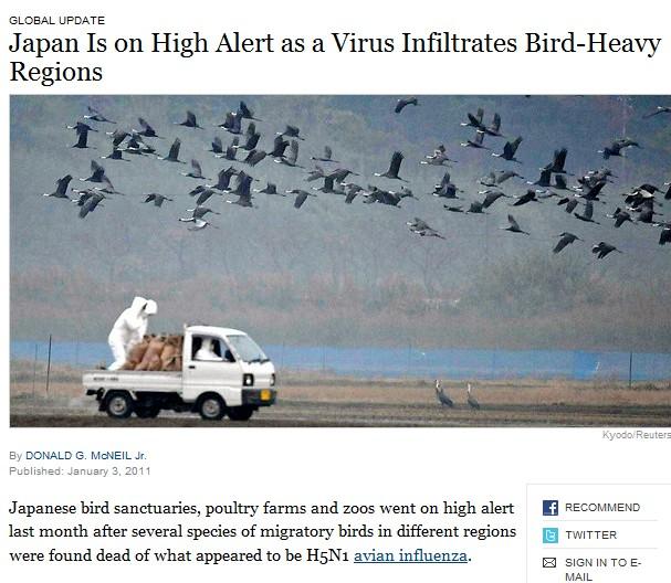 Milhares de pássaros caíram  E.U.A e Europa