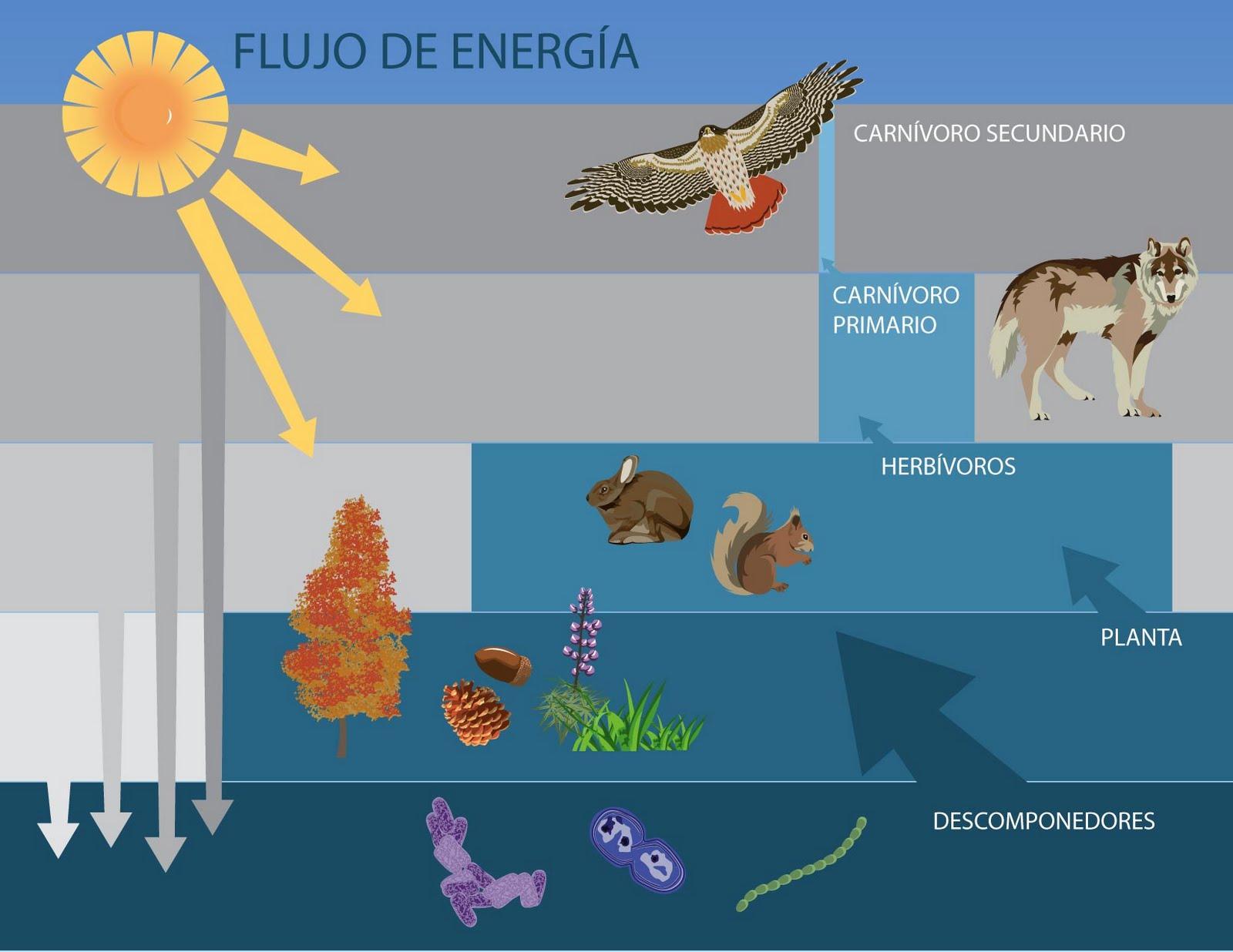 importancia respiracion fotosintesis dinamica fotosintesis:
