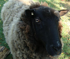 "Happylamb giving the look that says ""give me my treat -- now!"""