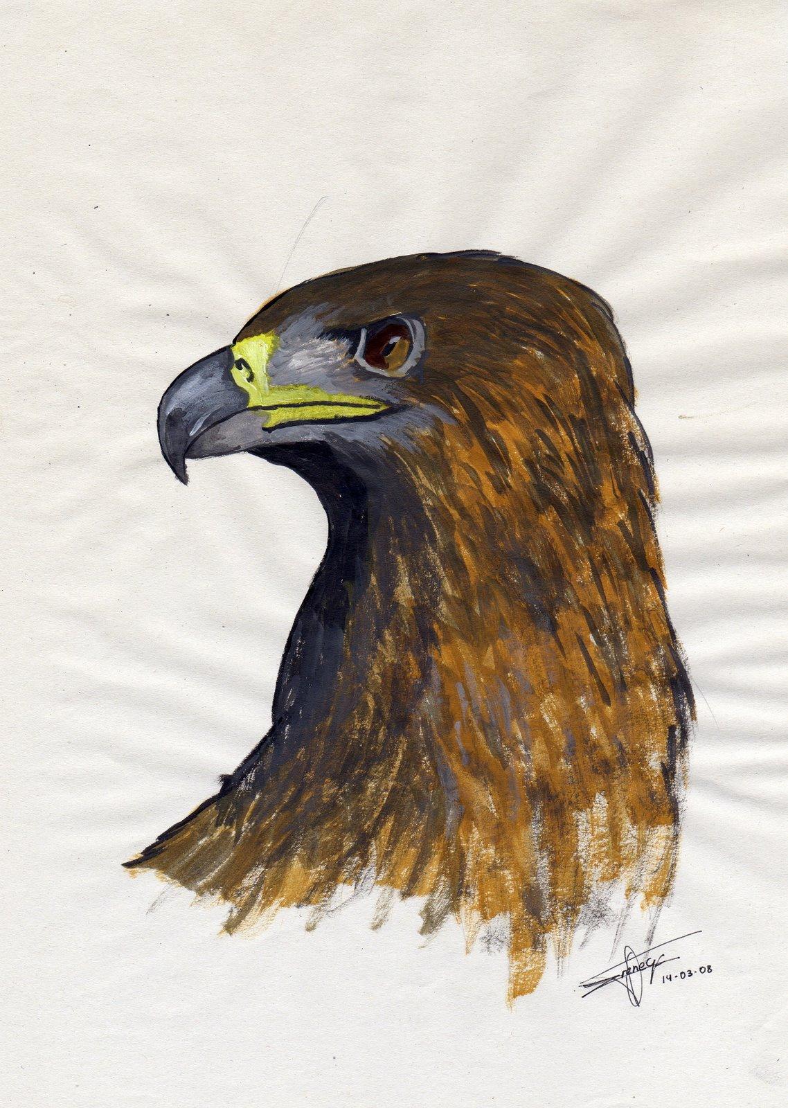 [FACCIÓN] Casas Humanas Aguila