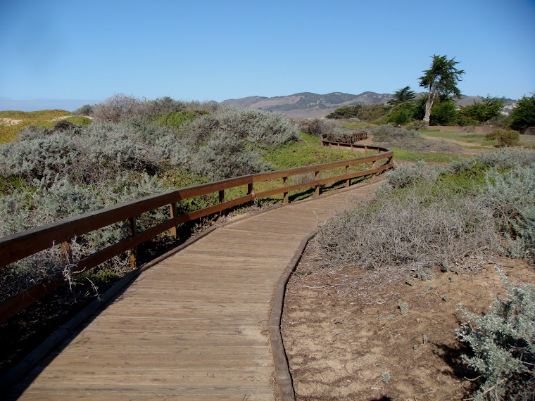 The Pismo Walkway
