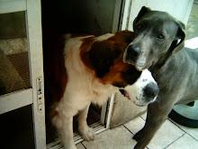 minhas cadelas