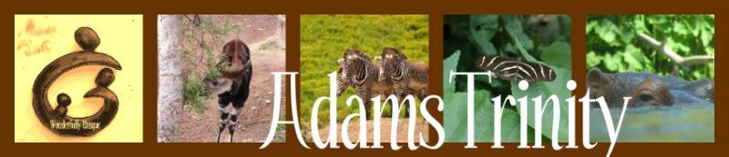 Adams Trinity