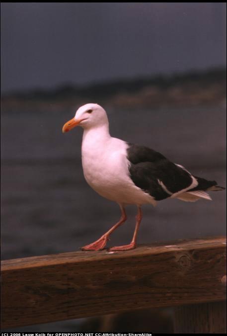 [seagull.jpg]