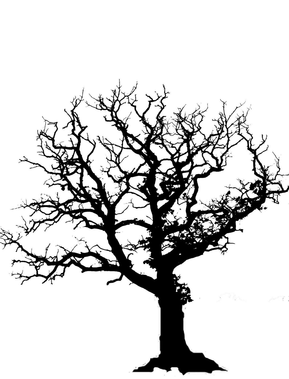 Tree reference photo oak tree in winter