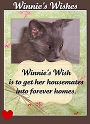 Winnie&#39;s friends need forever homes - please click!