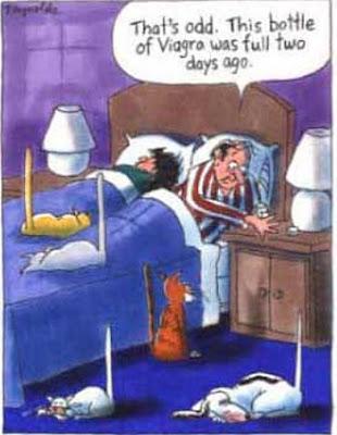 Karikatur Lucu - Viagra diminum Kucing dan Anjing - Funny Cartoon