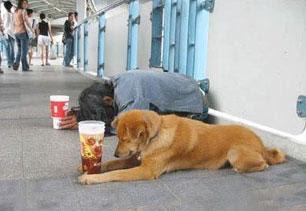 Foto Lucu - Anjing Pengemis - Funny Photo