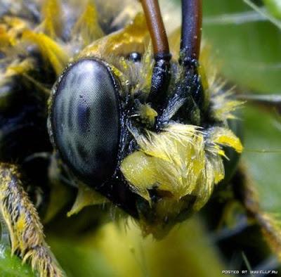 [Image: mata+serangga+%2811%29.jpg]