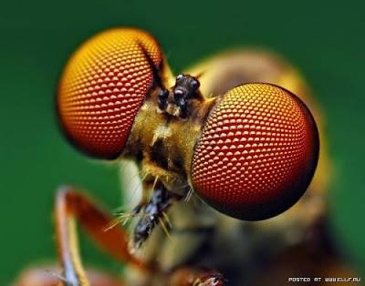 [Image: mata+serangga.jpg]
