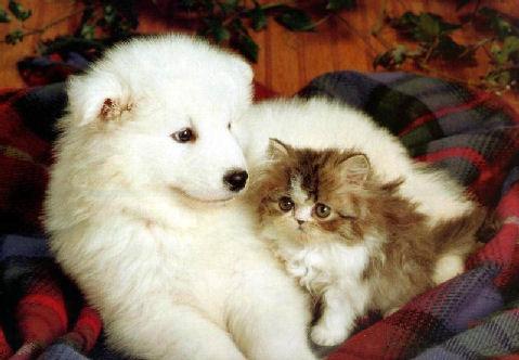 animais fofinhos e cut