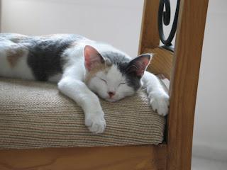 Gretel Sleeping3
