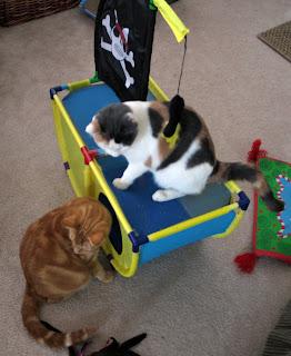 Pirate Kitties