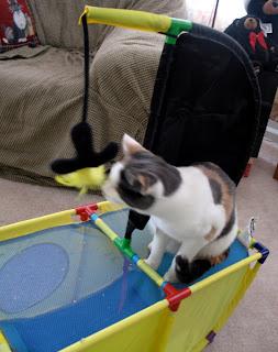 Aye-aye Pirate Kitty