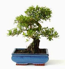 Mi bonsai ^^